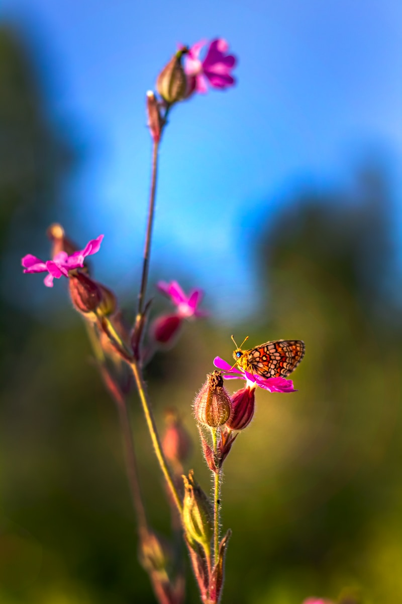 brown and black butterfly perched on pink flower in close up photography during daytime